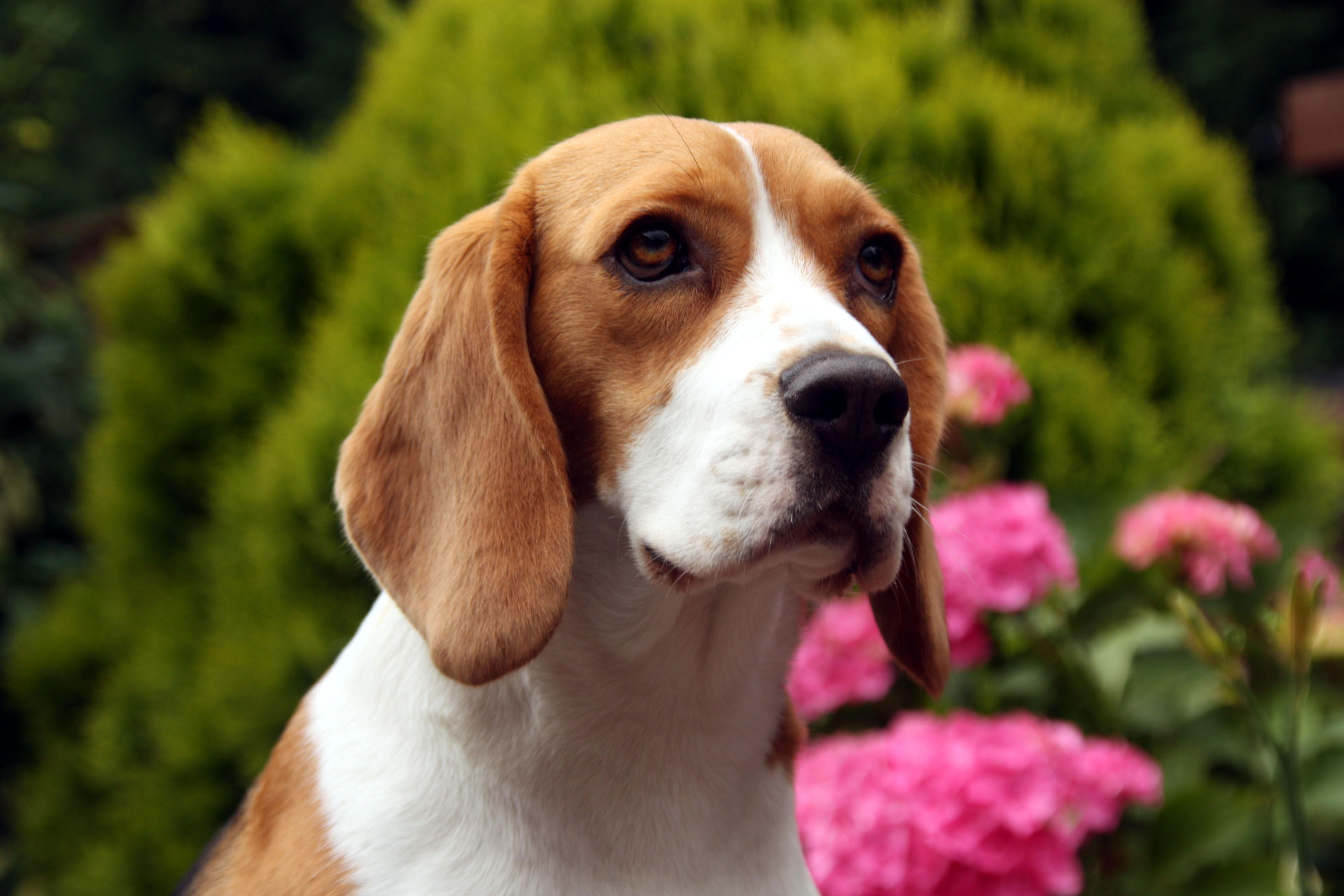 Canine Training Biting Problems
