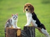 two-friends-beagle