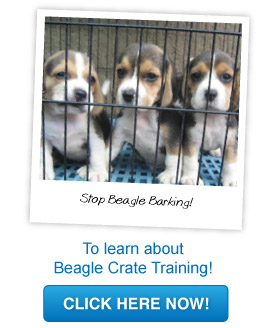 beagle crate training