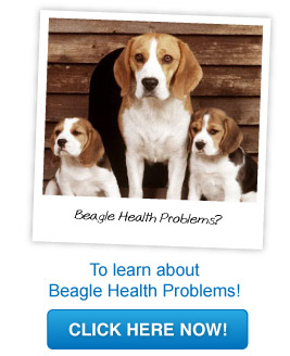 beagle health problems
