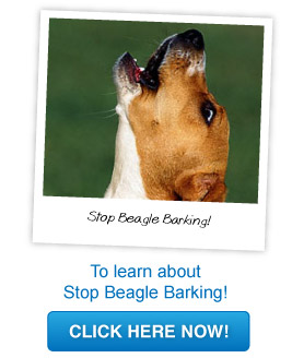 how to stop beagles from barking