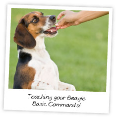 how to train a puppy basic commands