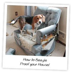 How to Beagle Proof your House
