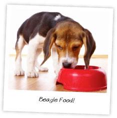 Beagle Food
